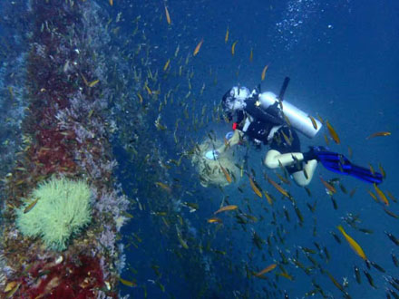 Miri Diving Packages