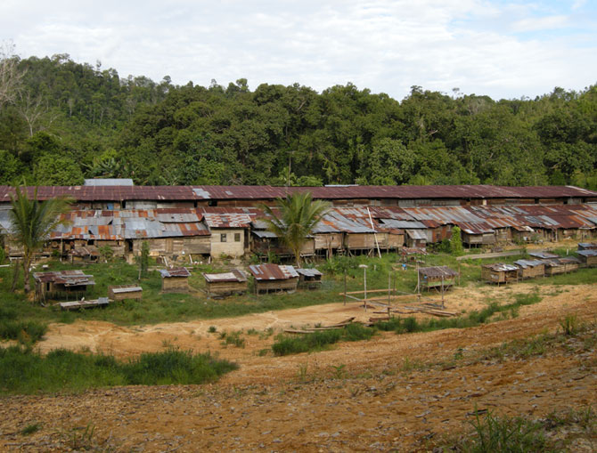 Traditional Iban Longhouse Safari (Lemanak Longhouse)