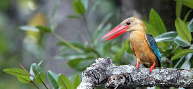 3D2N Birding at Tabin Package