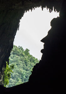 4D3N Miri City + Mulu Caves