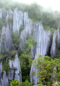 3D2N Mulu Pinnacles
