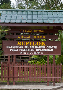 Sepilok Orang Utan Rehabilitation Centre + Rainforest Discovery Centre + Labuk Bay Proboscis Monkey Sanctuary