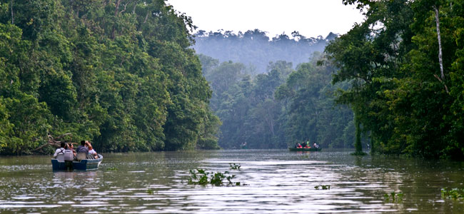2D1N Nature Wildlife of Kinabatangan River in Sukau